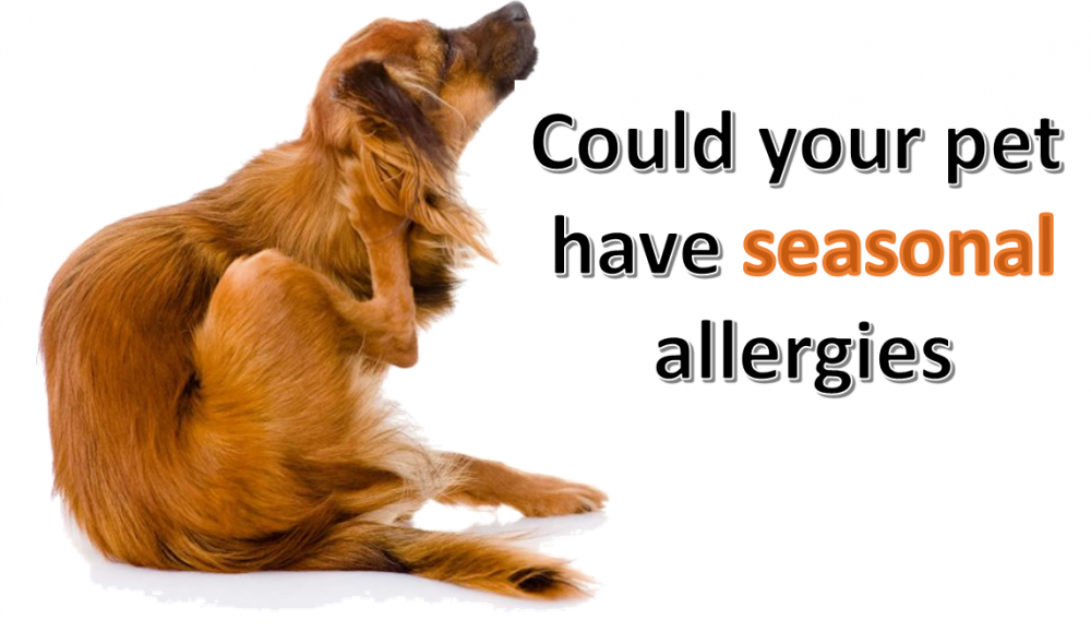 Could your Pet Suffer from Seasonal Allergies?