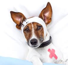 Pet Facing Surgery – Help them Recover Quicker with Massage